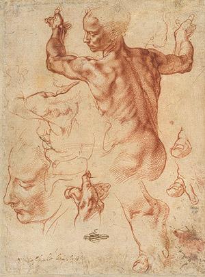 Renaissance anatomy